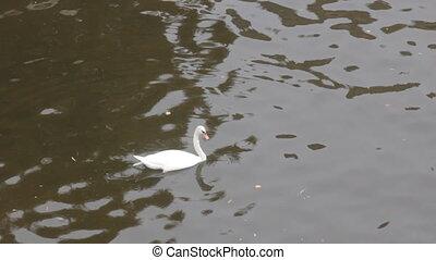 Mute Swan said most beautiful Regal bird because it...