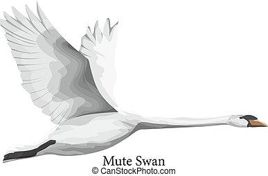 Mute swan white water bird in wildlife. Animal from the...