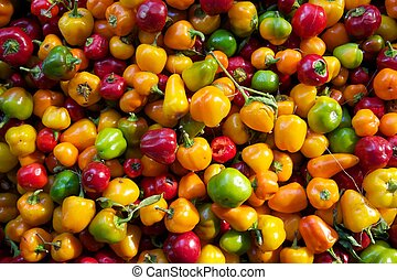 mini bell peppers - muti-coloured mini bell peppers at the...
