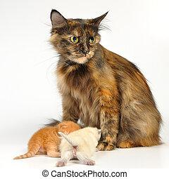 mutter, katz, mit, babykatzen