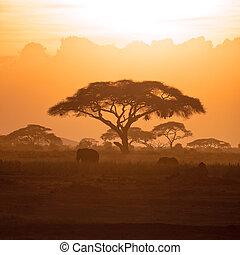 mutter, und, kälbchen, elefant, in, amboseli, an, sonnenuntergang