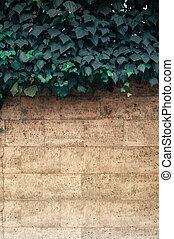 muur, achtergrond, bladeren, klimop, verticaal