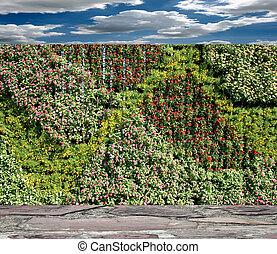 muur, bloemen, hemel, tuin, verticaal