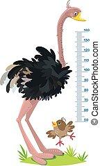 muur, gekke , struisvogel, meter, mus