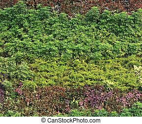 muur, groene, tuin, verticaal