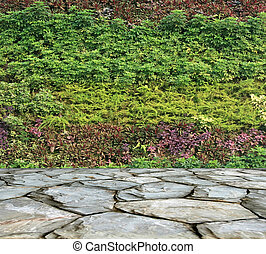 muur, plant, tuin, verticaal