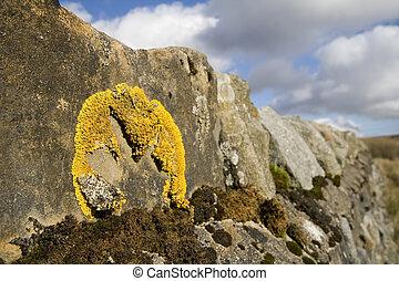 muur, steen, litchen
