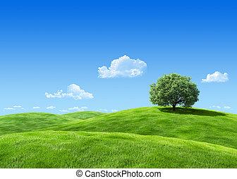 muy, detallado, 7000px, árbol, en, prado, plantilla, -, naturaleza, colección