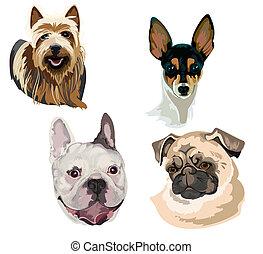 muzzl, 品種, 別, 4, 犬
