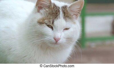 muzzle a cat closeup of slow motion video - the muzzle white...