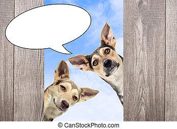 dog peeping - muzzle dog peeping