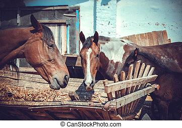 muzzle horses eating hay