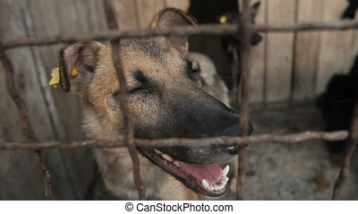 Muzzle of a Dog Behind bars - Dog Behind Metal wire fence or...