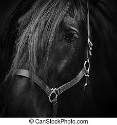 Muzzle of a horse.