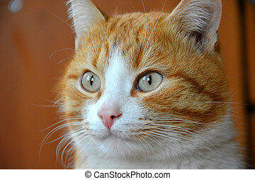 Muzzle of a red cat close-up. The cat looks away.