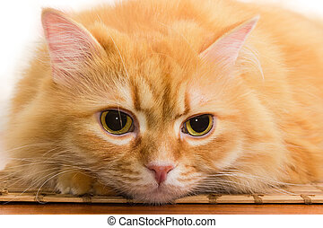 Muzzle of ginger cat lying on wooden surface close-up