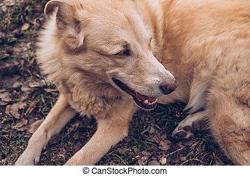 muzzle of laying on the ground senior dog