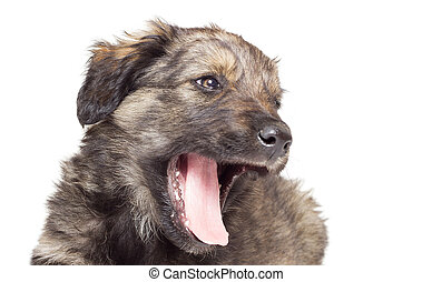 muzzle puppy on white background