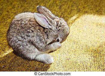 myć, niemowlę królik