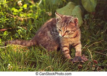 myš, kočka, po, mourek, honba, min.čas i příč.min. od catch...