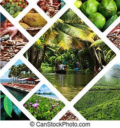 (my, collage, india, viaje, photos), -, plano de fondo, imágenes
