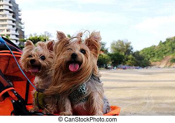 My dogs on the beach.