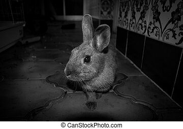 my rabbit speedy in black and white