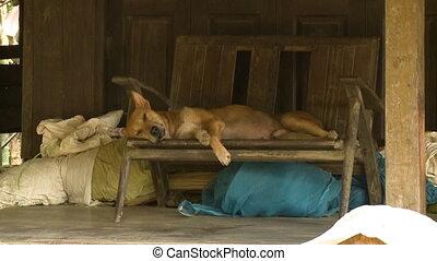 myanmar, bois, chien, siège, endormi, village