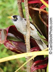Myna Bird On Branch