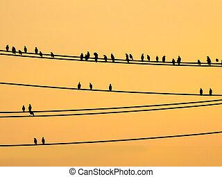 mynas, draden, zittende , hemel, ondergaande zon , vogels