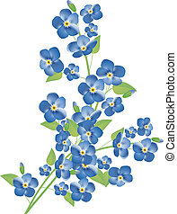myosotis, fleurs