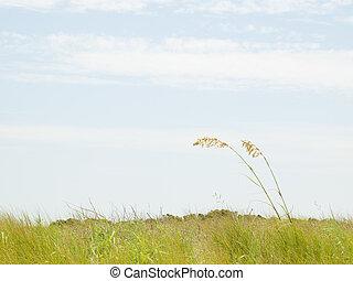 Myrtle Beach is a coastal city on the east coast of the ...