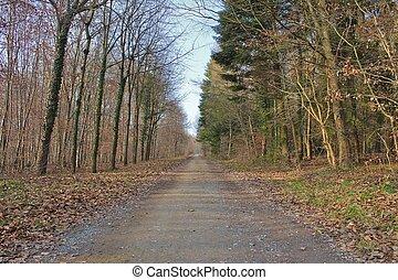 mystérieux, forêt automne, chemin