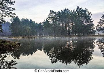 mystérieux, matin, forêt, temps