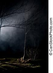mysteriös, bäume, in, a, terrorisiert, wald