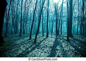 mysteriös, dunkel, altes , wald, in, nebel, blaues, nacht