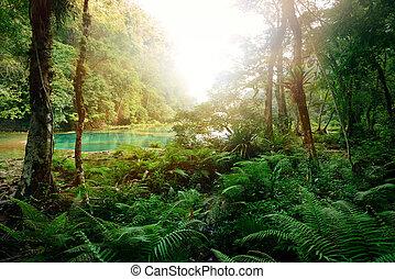 mysteriös, maya, dschungel, in, der, nationalpark, semuc, champey, guatemala.