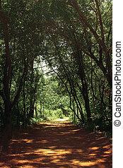 mysterieus, bos, tunnel, achtergrond