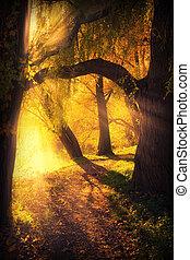 mysterieus, weg, tussen, boog, van, bomen