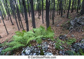 Mysterious dark forest in Poland