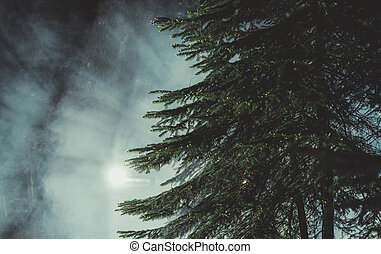 Mysterious Dark Forest with Night Time Fog