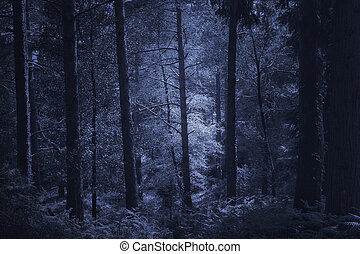 Mysterious deep forest