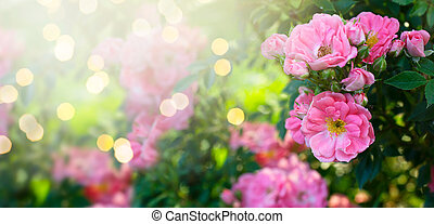 Mysterious fairy tale spring floral banner with fabulous blooming pink rose flowers in summer garden on blurred green sunny bright shiny glowing background with shining light bokeh