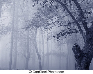 Mysterious foggy forest