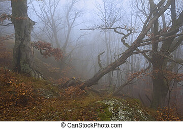Mysterious forest in autumn