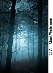 Mysterious foggy pine forest at dusk