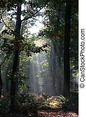 Mysterious sunlight and fog in the forest