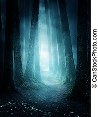 Mysterious Forest Pathway