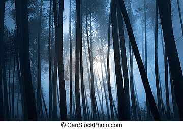 Mysterious forest - mysterious forest on a full moon misty...