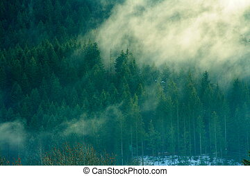 Mysterious forest with fog in the early morning (french...